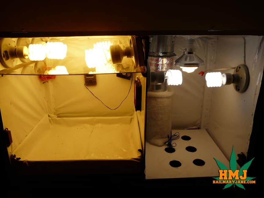 how to grow weed in your room step by step
