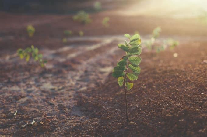 cannabis seeds environment