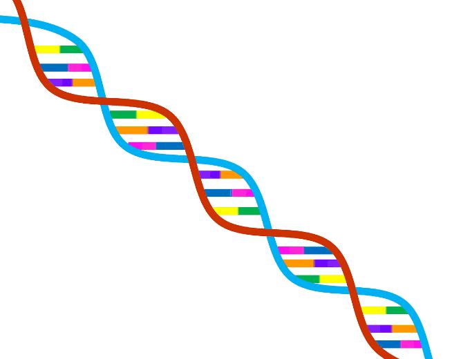 genetics organic cannabis seeds